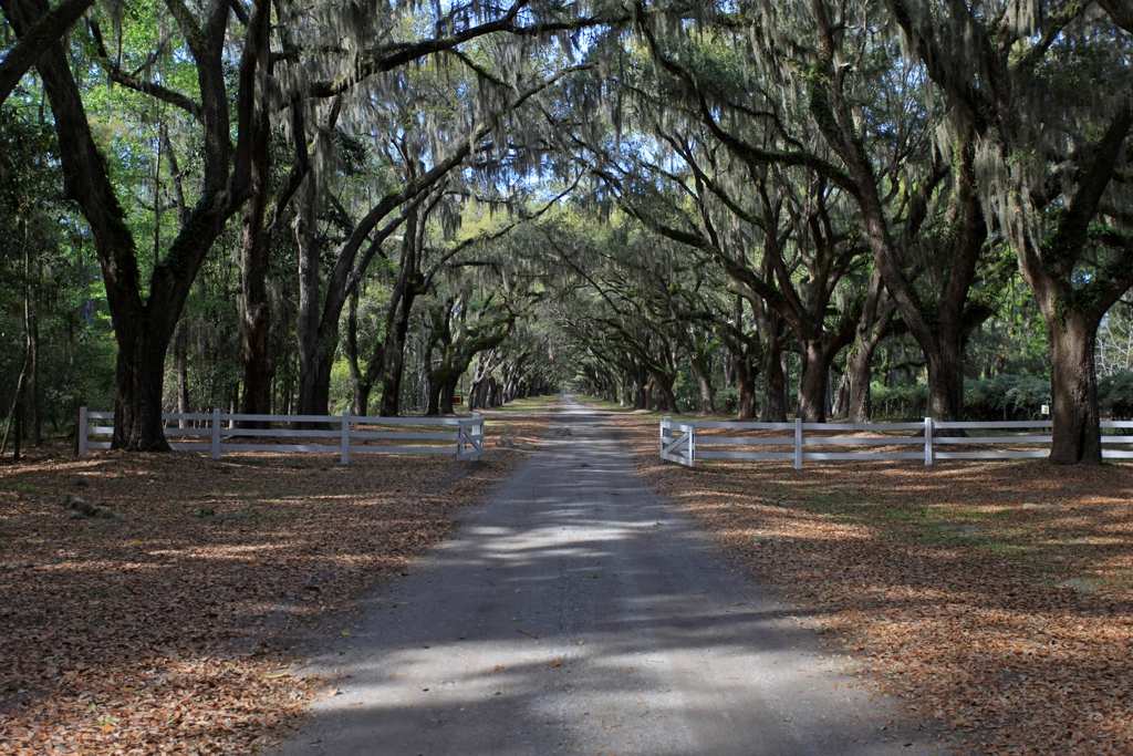 Boulevard The 1 and a half mile long tree lined drive at ...